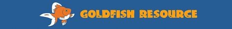 GoldfishResource.com  Folks who love Goldfish and their carers.