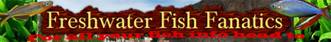 Freshwater Fish Fanatics