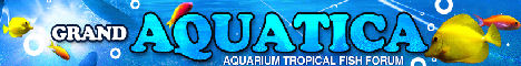 GrandAquatica.org &bull; An Online Tropical Fish Community