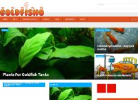 Goldfish Care - All Things Goldfish