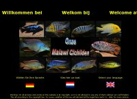 Our Malawi-cichlids