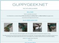 Guppy Geek Fancy Show Guppy