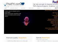 thaiFH flowerhorn supplier
