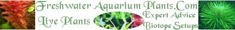 Aquarium plants, and aquascape plant packages
