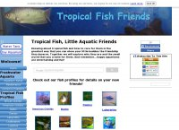 Tropical Fish Friends
